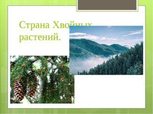 Страна Хвойных растений.