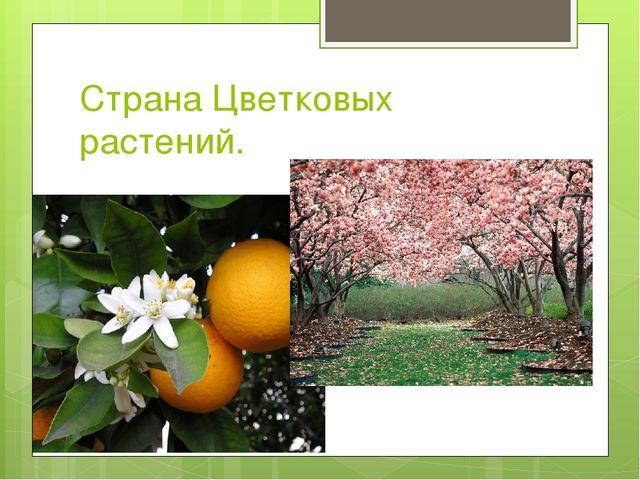 Страна Цветковых растений.