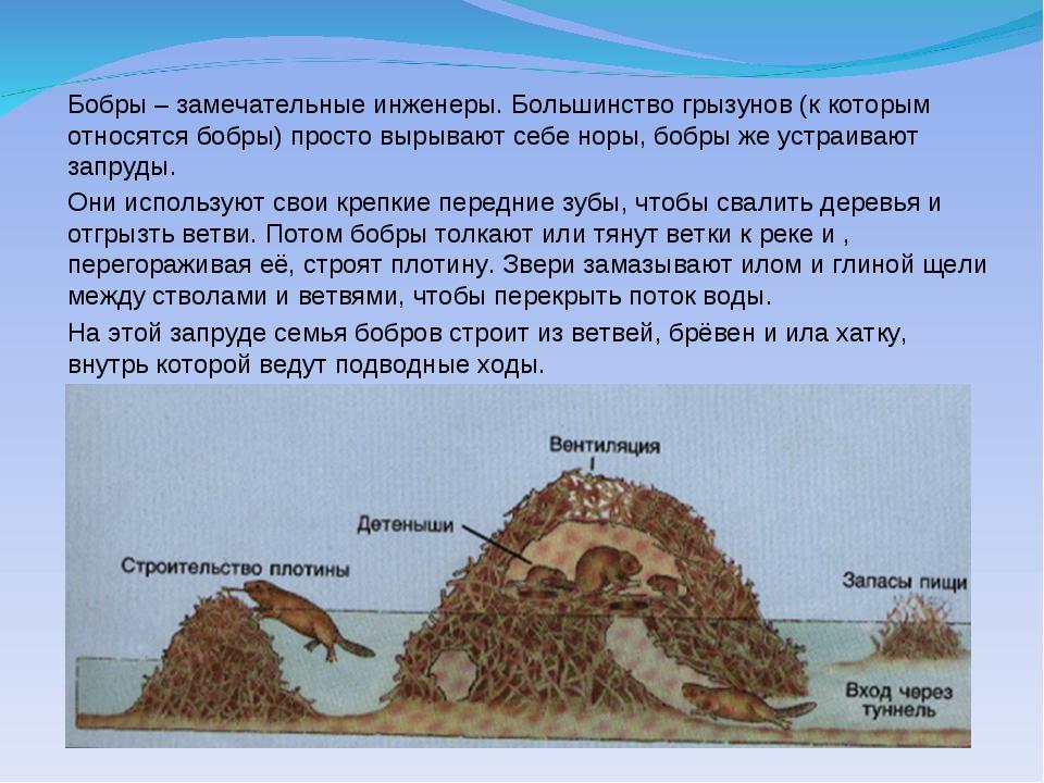 Рассказ о бобрах из книги Зеленые страницы  Реферат о бобрах 2 класс