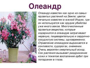 Олеандр Олеандр известен как одно из самых ядовитых растений на Земле; цветок