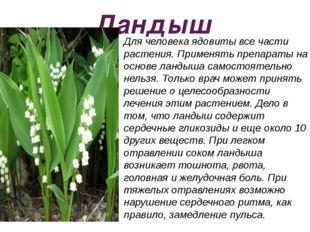 Ландыш Для человека ядовиты все части растения. Применять препараты на основе