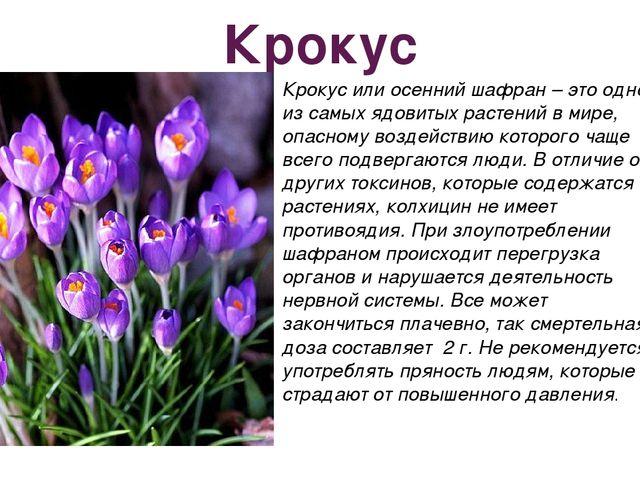 Крокус Крокус или осенний шафран – это одно из самых ядовитых растений в мире...