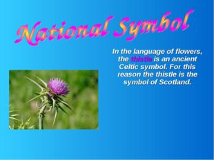 In the language of flowers, the thistle is an ancient Celtic symbol. For thi