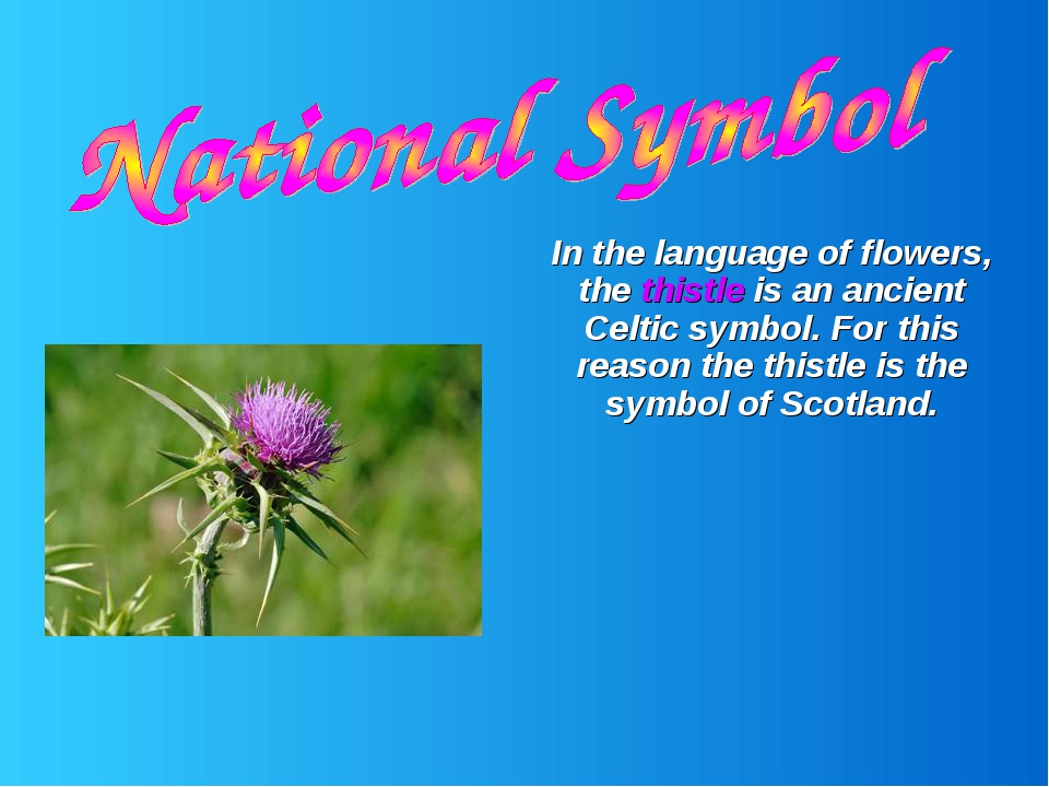 In the language of flowers, the thistle is an ancient Celtic symbol. For thi...