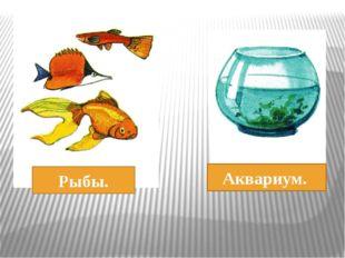 Рыбы. Аквариум.