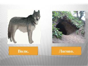 Волк. Логово.