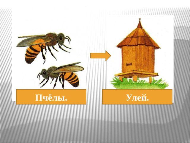 Пчёлы. Улей.