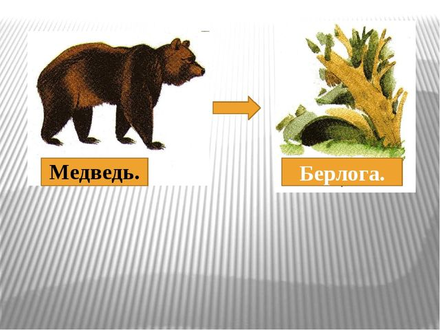 Медведь. Берлога.