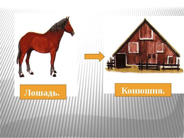Лошадь. Конюшня.