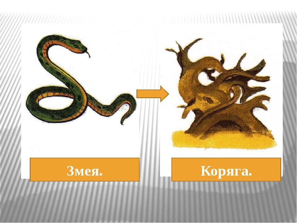 Змея. Коряга.