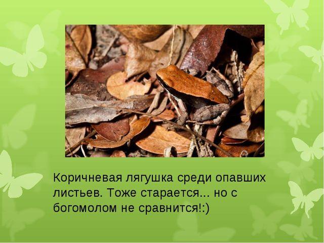 Коричневая лягушка среди опавших листьев. Тоже старается... но с богомолом не...