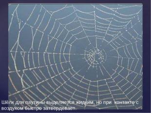 Шёлк для паутины выделяется жидким, но при контакте с воздухом быстро затверд