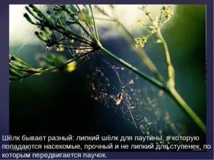Шёлк бывает разный: липкий шёлк для паутины, в которую попадаются насекомые,