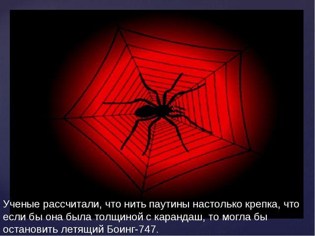 Ученые рассчитали, что нить паутины настолько крепка, что если бы она была то...