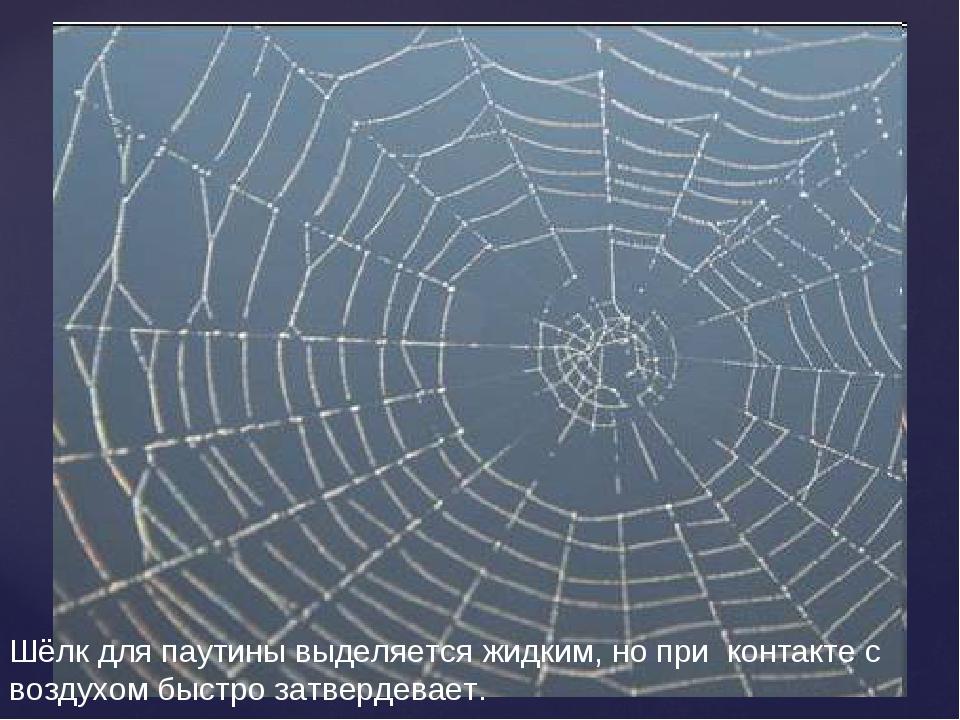 Шёлк для паутины выделяется жидким, но при контакте с воздухом быстро затверд...