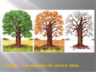 Осень - это переход от лета к зиме.