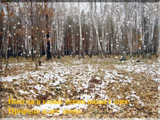Иногда в конце осени падает снег. Природа ждет зимы.
