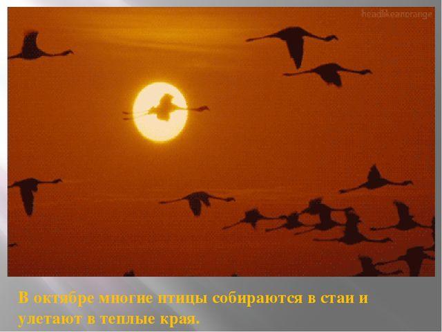 В октябре многие птицы собираются в стаи и улетают в теплые края.