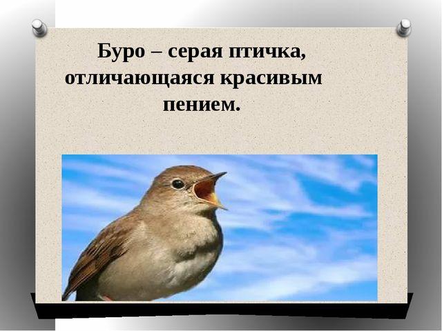 Буро – серая птичка, отличающаяся красивым пением.