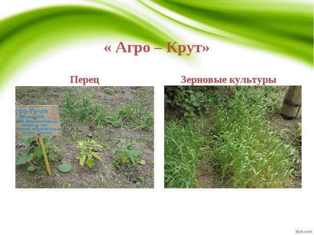 « Агро – Крут» Перец Зерновые культуры