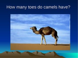 How many toes do camels have?