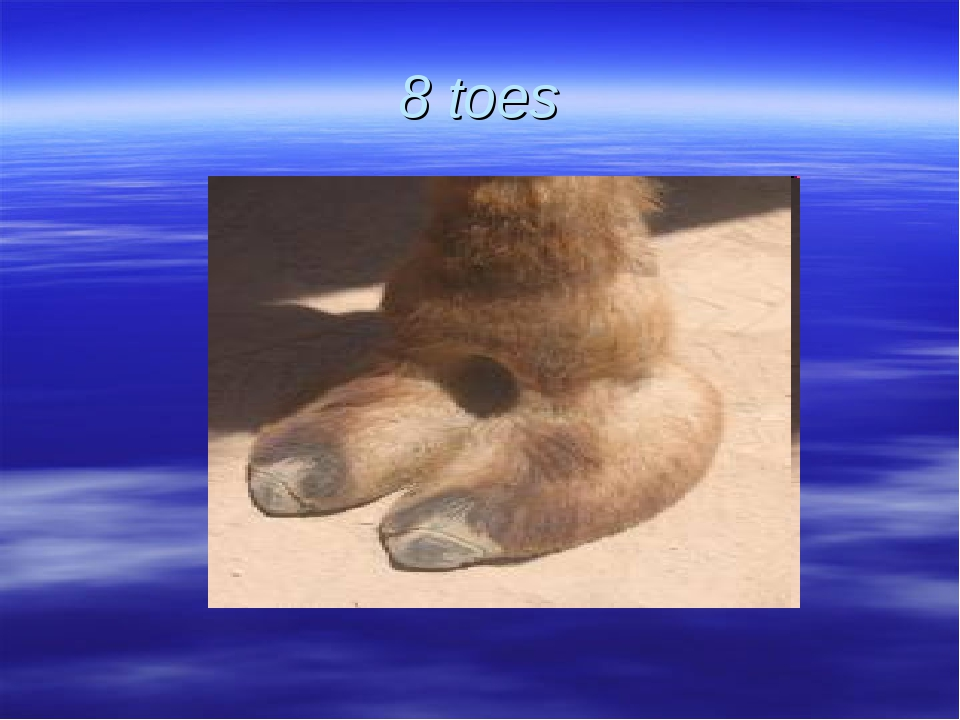 8 toes