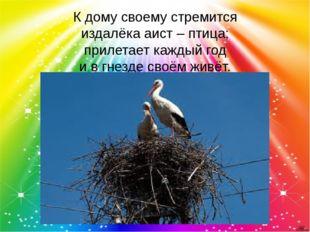 К дому своему стремится издалёка аист – птица; прилетает каждый год и в гнезд