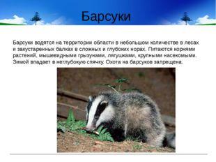 Барсуки Барсуки водятся на территории области в небольшом количестве в лесах