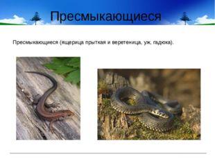 Пресмыкающиеся Пресмыкающиеся (ящерица прыткая и веретеница, уж, гадюка).