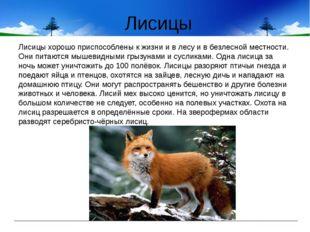 Лисицы Лисицы хорошо приспособлены к жизни и в лесу и в безлесной местности.
