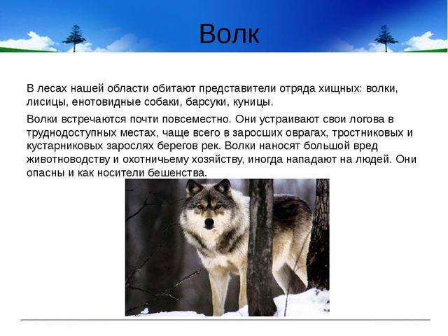 Волк В лесах нашей области обитают представители отряда хищных: волки, лисицы...