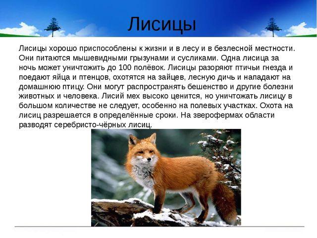 Лисицы Лисицы хорошо приспособлены к жизни и в лесу и в безлесной местности....