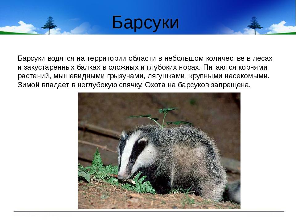 Барсуки Барсуки водятся на территории области в небольшом количестве в лесах...