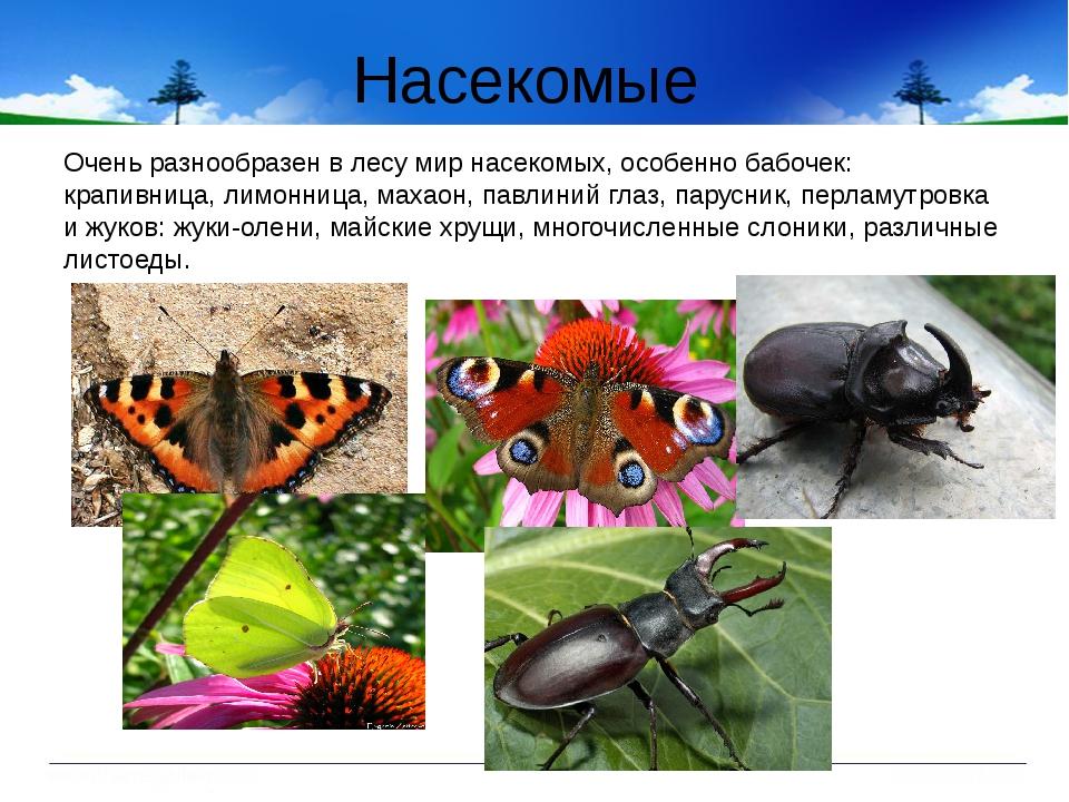 Насекомые Очень разнообразен в лесу мир насекомых, особенно бабочек: крапивни...