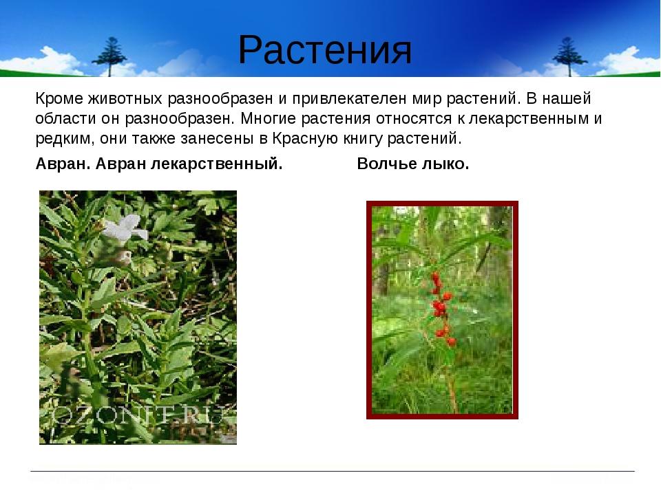 Растения Кроме животных разнообразен и привлекателен мир растений. В нашей об...
