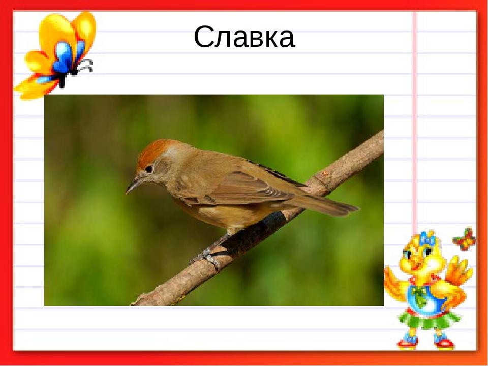 Славка