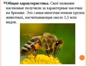 Общая характеристика.Своё название насекомые получили за характерные насечки