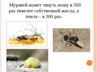 Муравей может тянуть ношу в 500 раз тяжелее собственной массы, а пчела – в 3