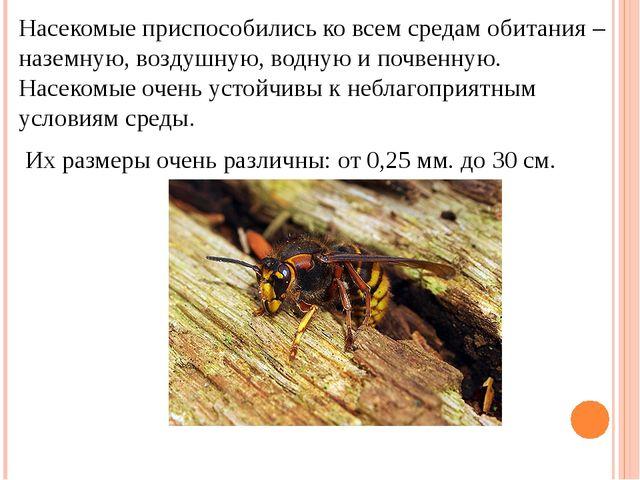 Презентация класс на 7 тему насекомые