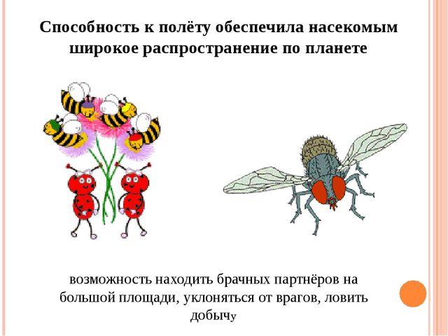 Способность к полёту обеспечила насекомым широкое распространение по планете...