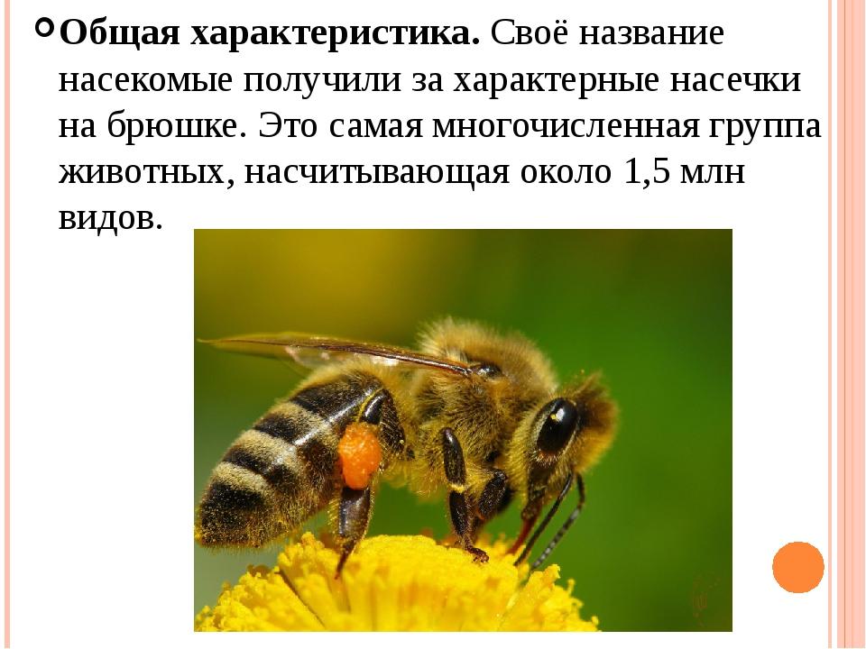 Общая характеристика.Своё название насекомые получили за характерные насечки...