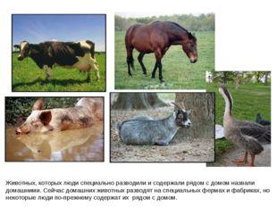 Животных, которых люди специально разводили и содержали рядом с домом назвали