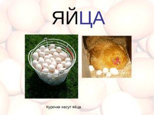 Курочки несут яйца ЯЙЦА