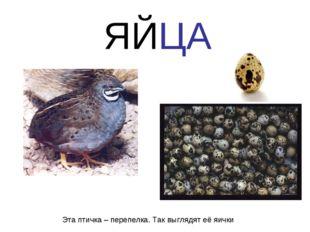 Эта птичка – перепелка. Так выглядят её яички ЯЙЦА