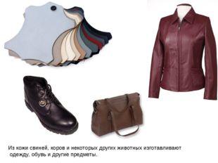 Из кожи свиней, коров и некоторых других животных изготавливают одежду, обувь