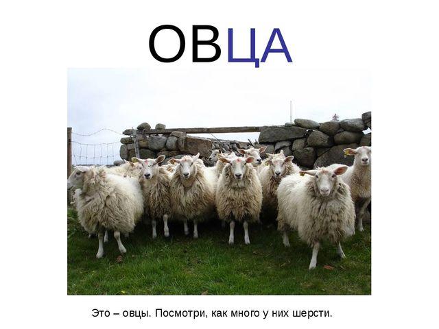 ОВЦА Это – овцы. Посмотри, как много у них шерсти.