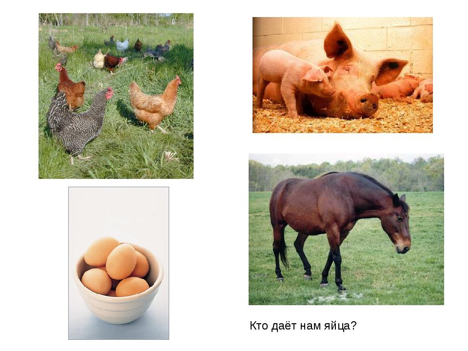 Кто даёт нам яйца?