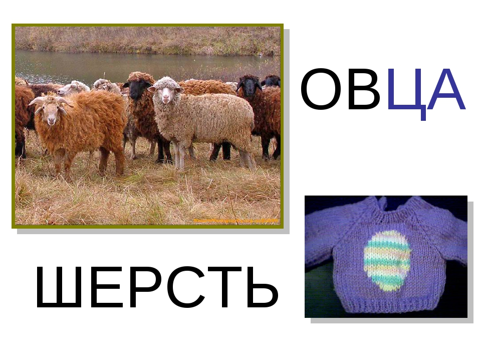 ОВЦА ШЕРСТЬ