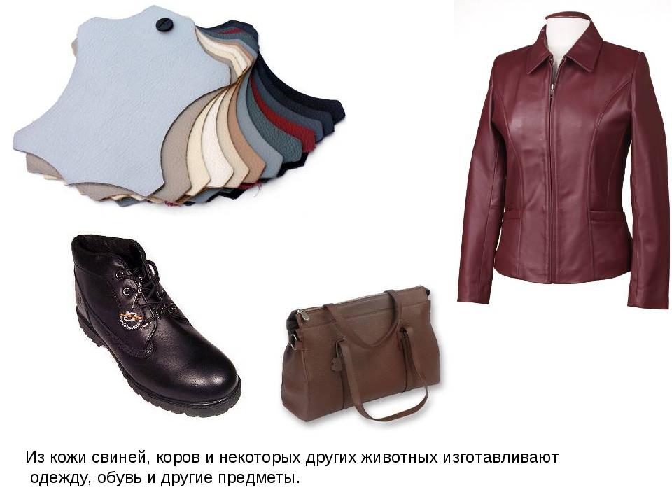 Из кожи свиней, коров и некоторых других животных изготавливают одежду, обувь...