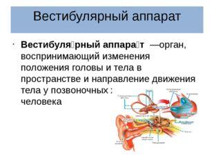 Вестибулярный аппарат Вестибуля́рный аппара́т—орган, воспринимающий изменен
